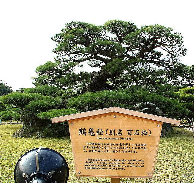 ritsurinpark_tsurukamematsu.jpg