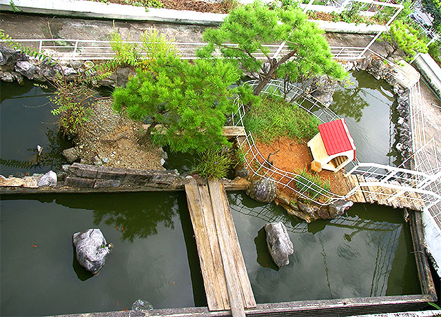 sawaman_pond1a.jpg