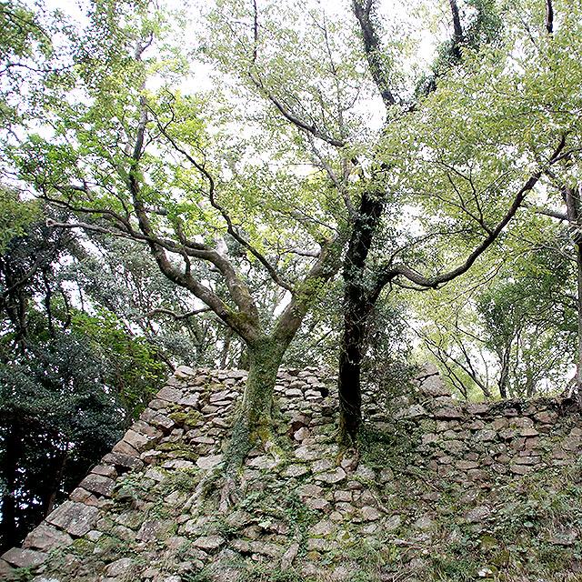 sumotojo_stonetree.jpg