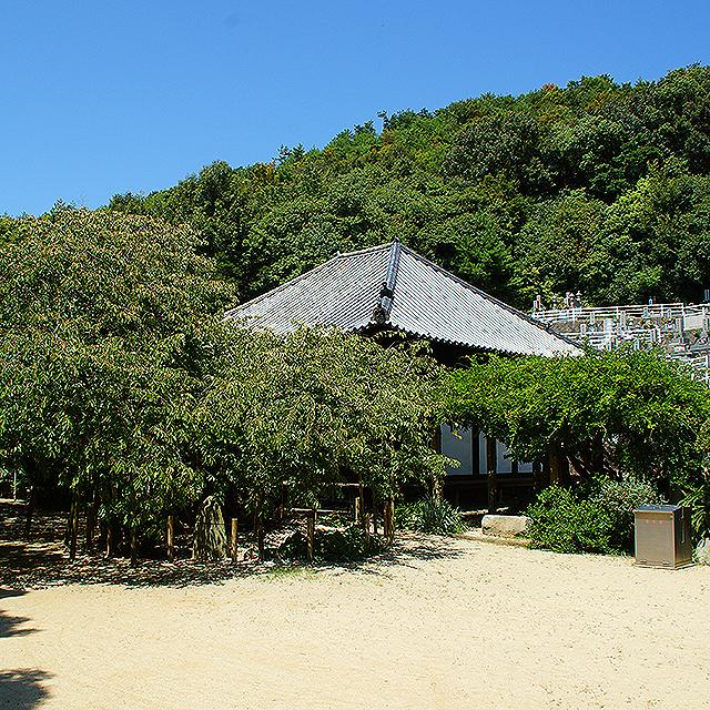 taihouji_hondo_facade2.jpg