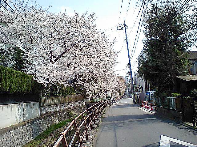 tcgm05_marukogawa.jpg