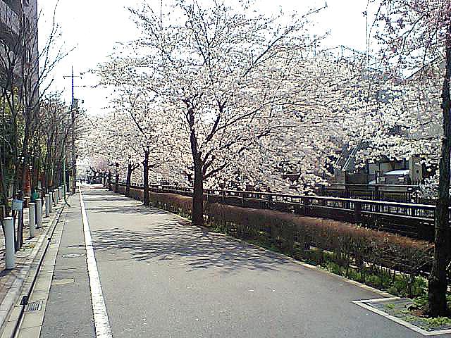 tcgm05_tanisawagawa.jpg