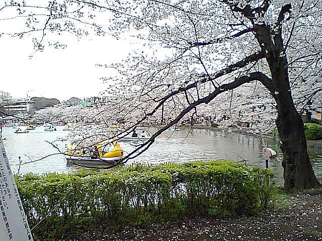 tcgm07_shinobazunoike.jpg