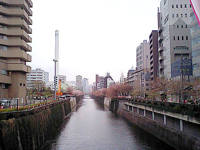 tcgm08_megurogawa_gomi.jpg