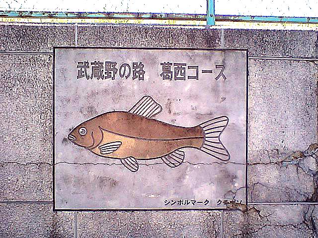 tcgm10_musashiro.jpg