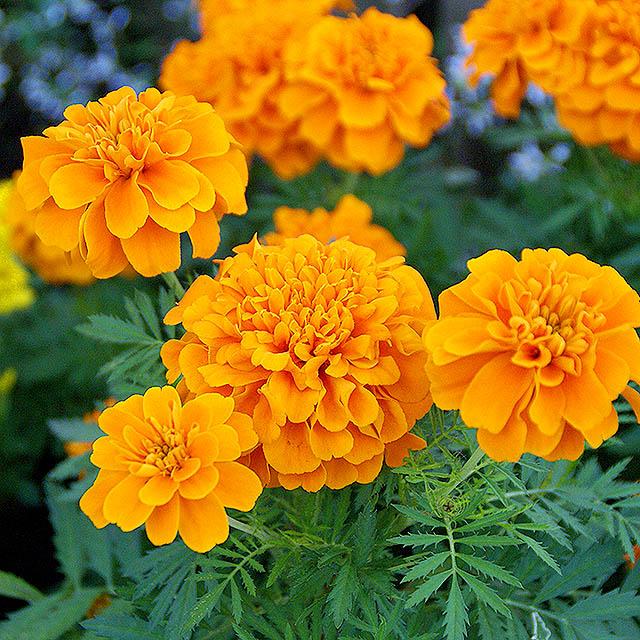 tch_flower2.jpg