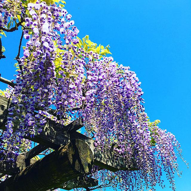 tenshaen_spring4.jpg