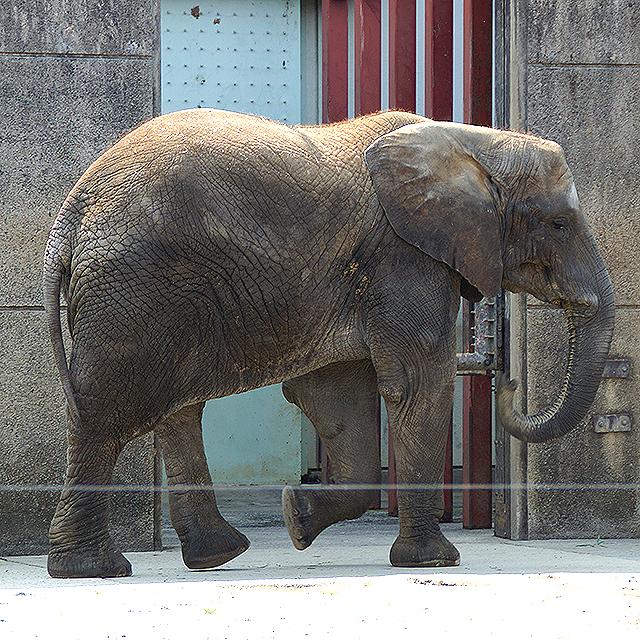 tobezoo_elephant.jpg
