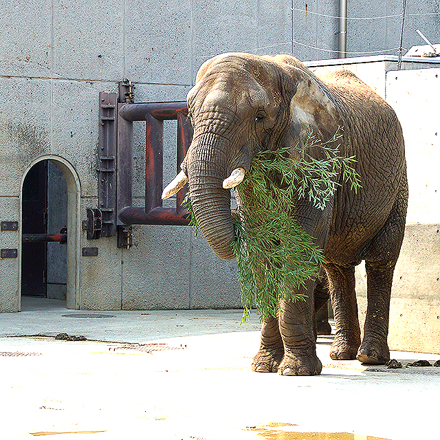 tobezoo_elephant2.jpg