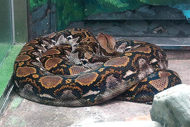 tobezoo_snake.jpg