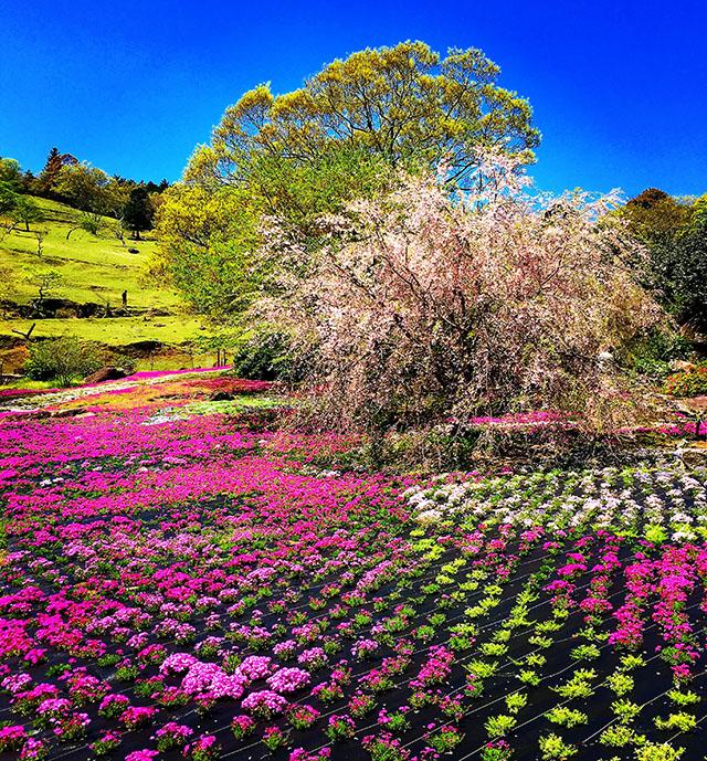yamamotofarm_spring17.jpg