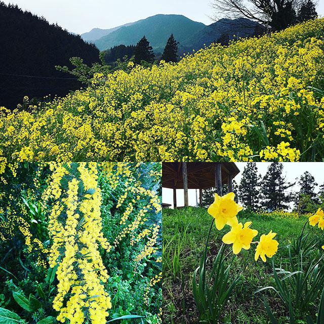 yellowhill_spring17_1.jpg