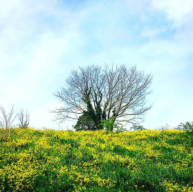 yellowhill_spring17_2.jpg