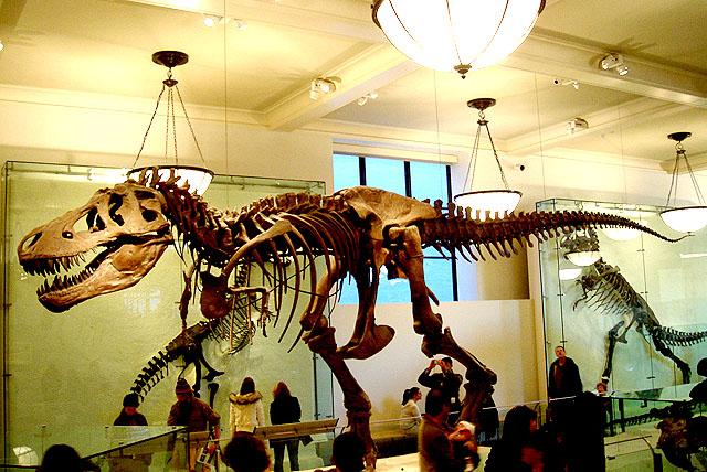 amnh_dinosaurus1.jpg