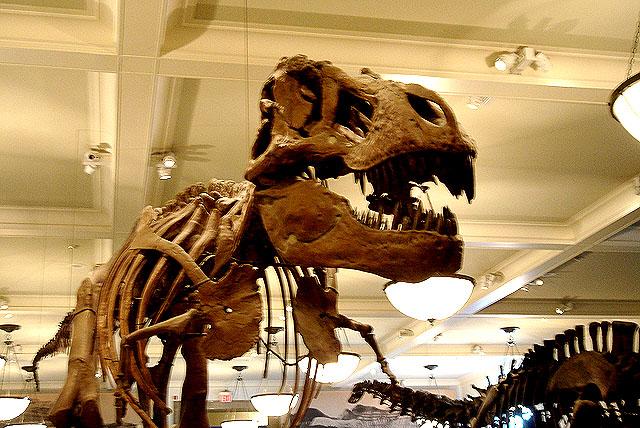 amnh_dinosaurus1a.jpg