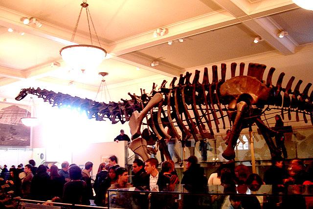 amnh_dinosaurus6.jpg