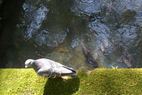 animal_dove_ise.jpg