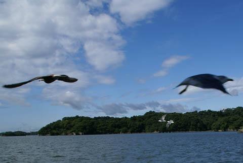 animal_seagull_matsushima.jpg