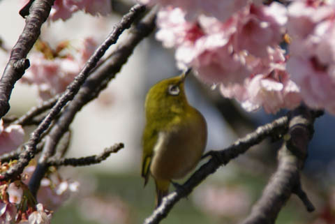 animal_whiteeye_tamariver.jpg