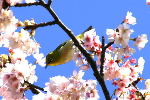 animal_whiteeye_tamariver2.jpg