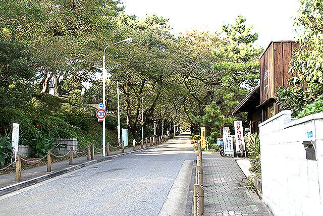aoyama_reien2.jpg
