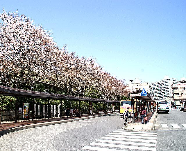 atami2_st_sakura.jpg