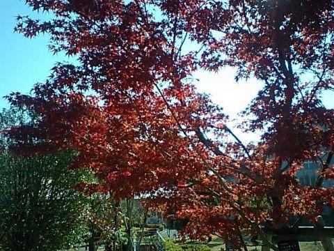 autumn_tree.jpg
