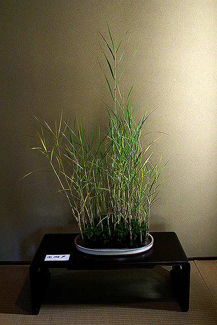 bukeyashiki_grass.jpg