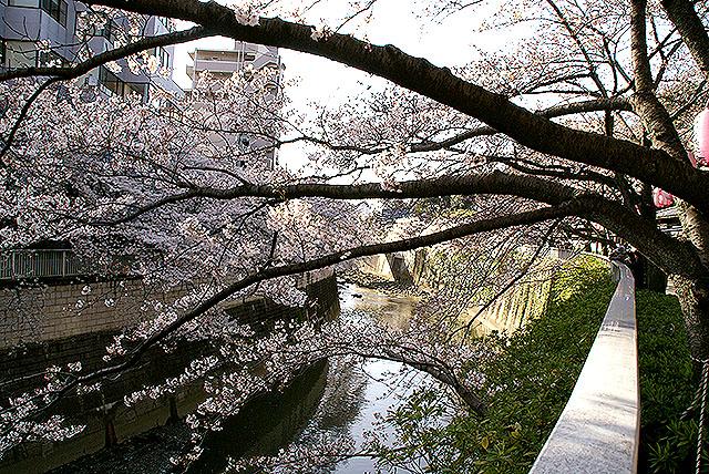 chinzanso_kandagawa.jpg