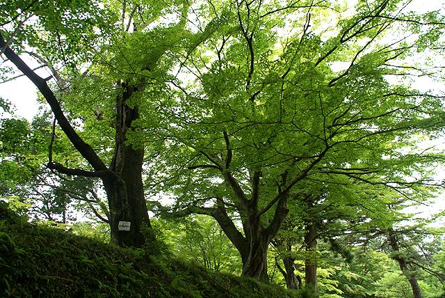 chusonji_forest1.jpg