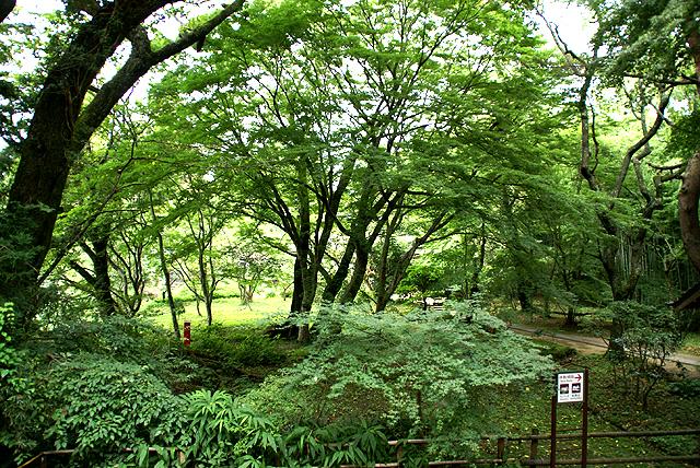 chusonji_forest2.jpg