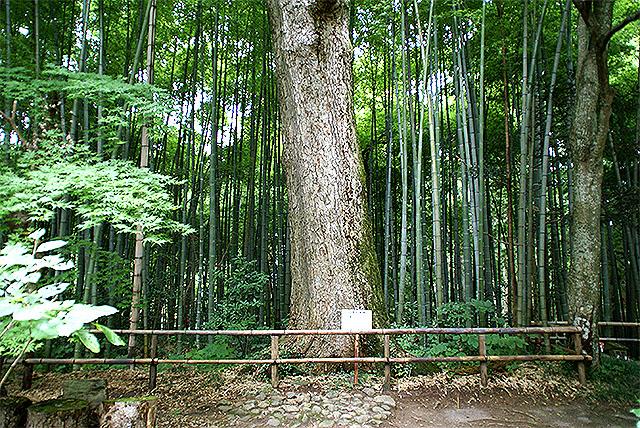 chusonji_shakado_bamboo.jpg