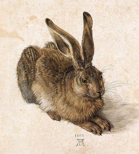 durer_rabbit.jpg