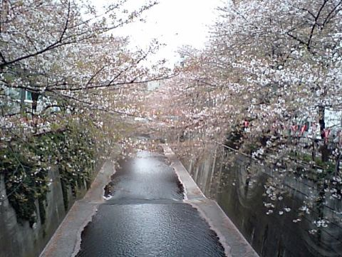 gm_megurogawa_start246.jpg