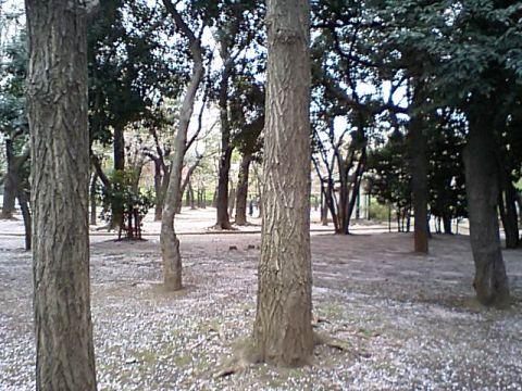 gm_setagaya_park2.jpg