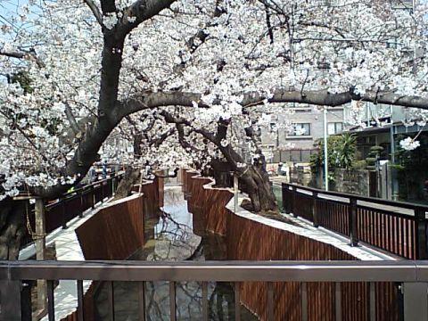 gm_tanisawagawa_r246.jpg