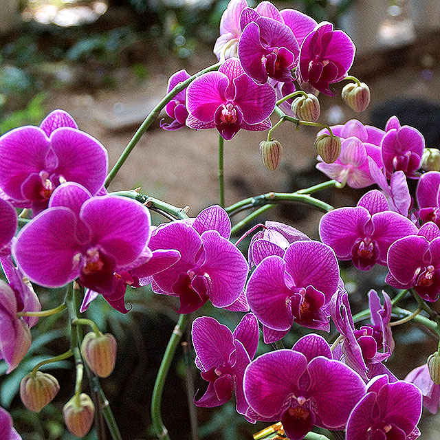 gringrin_pinkflower.jpg