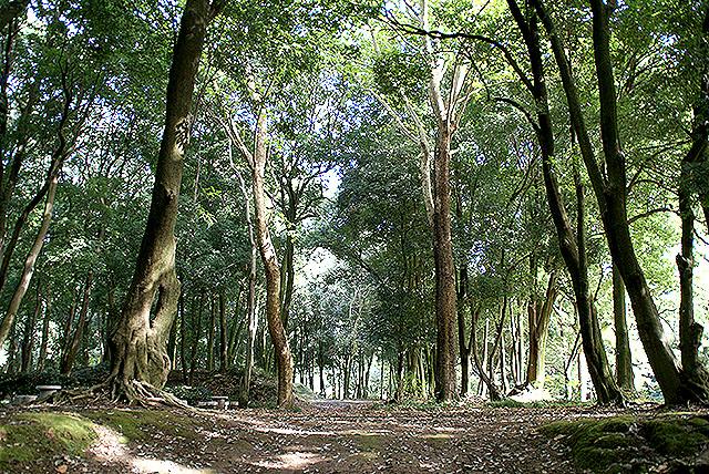gunmaforest_treeroad2.jpg