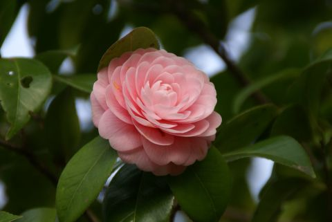 higan_todoroki_flower_pinky.jpg