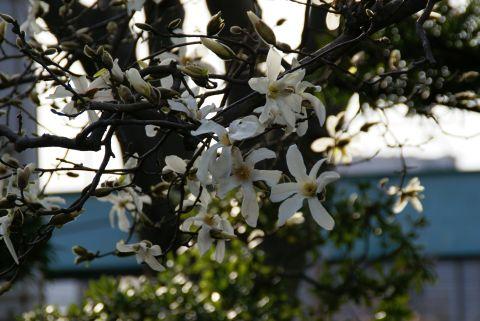 ikegamiplant1.jpg