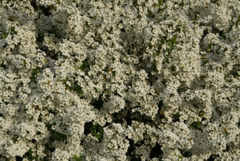 ikegamiplant4.jpg