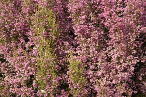 ikegamiplant6.jpg