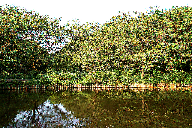 ins_pond1.jpg