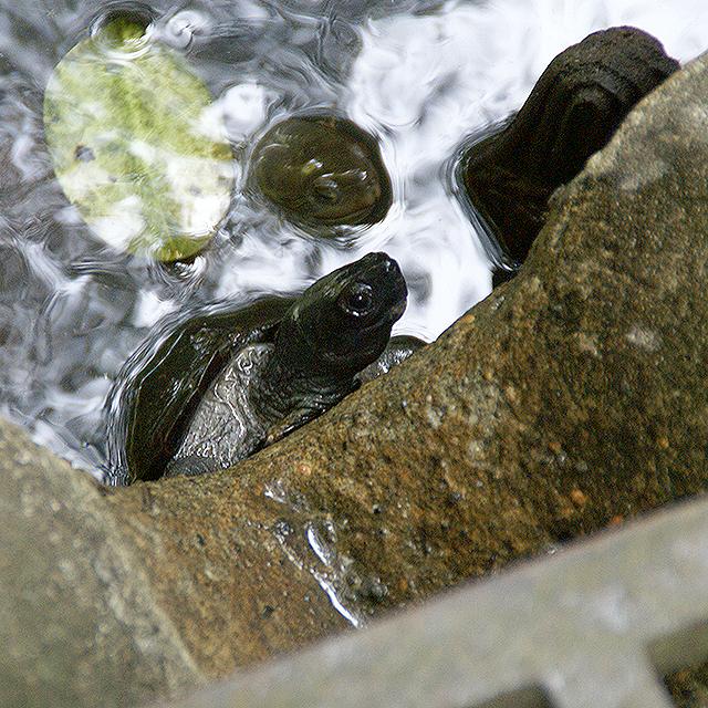 ins_turtle1.jpg