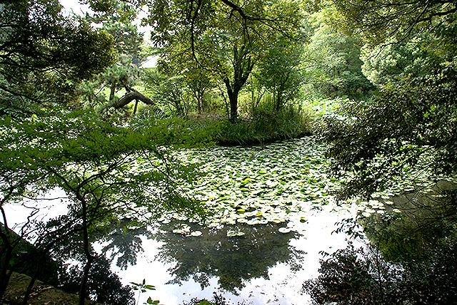 kamakuramuseum_pond.jpg