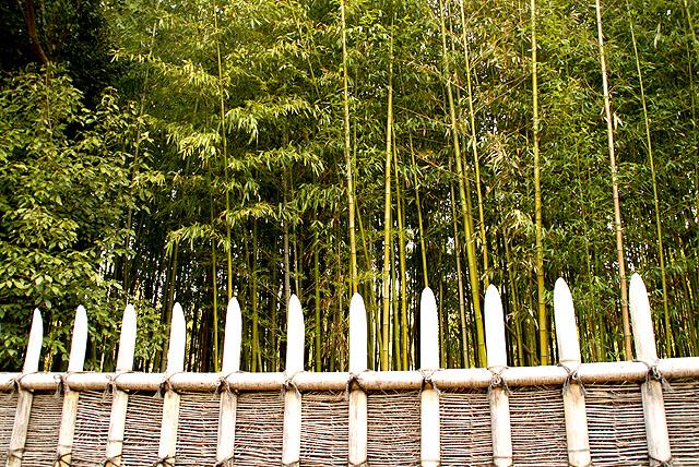 katsurarikyu_bamboos.jpg
