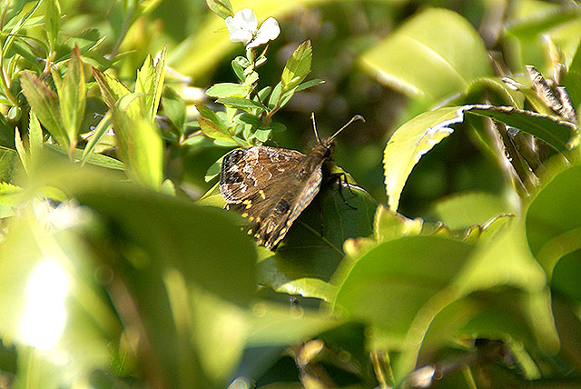 kmam_butterfly.jpg