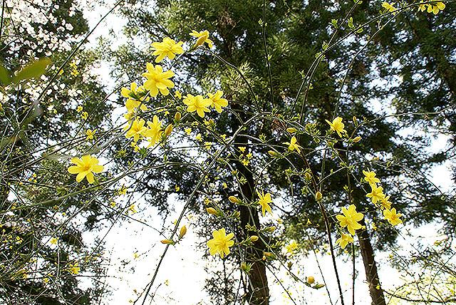 kmam_plum_yellow.jpg