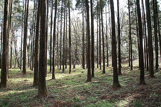 kmam_trees2.jpg