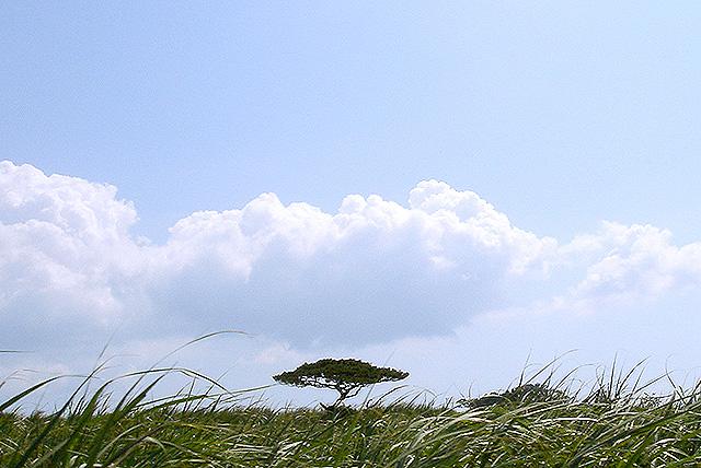 kohama_tree2.jpg